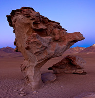 BOLIVIA - ROCK TREE AT DAWN - SILOLI DESERT