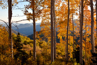 ASPENS - NEAR SUMMIT, UTAH