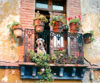 DOG ON A BALCONY - MEXICO CITY